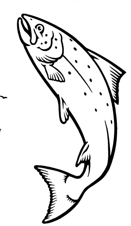 Ho disegnato il logo della cornucopia con i frutti di mare e il salmone che salta.